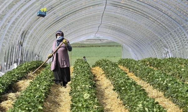 Smart Farming 4.0 All and COVID-19